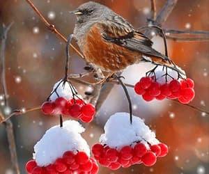 gif and winter wonderland image