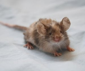 mouse, aesthetic, and cute image