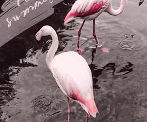 animals and flamingo image