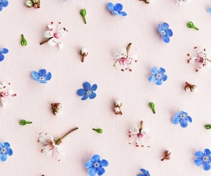 flower, wallpapers, and backgrounds image