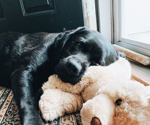 black, cuddle, and dogs image