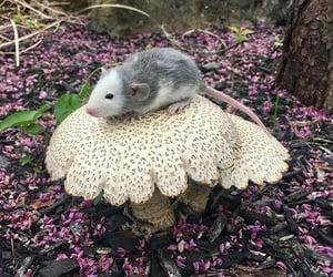 mouse, mushroom, and cute image