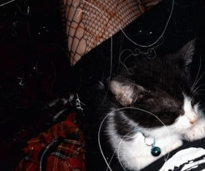 fishnets, misfits, and kitten image