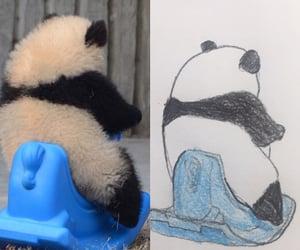 panda, baby panda, and drawing image