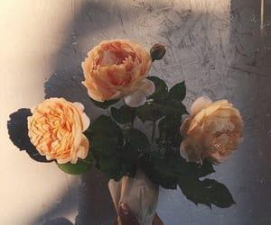 flowers, orange, and roses image