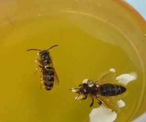 bee, honey, and yellow image
