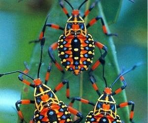 beetles image