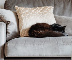 black, cat, and couch image