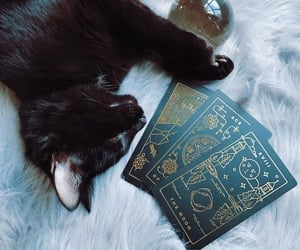 witch, cat, and tarot image