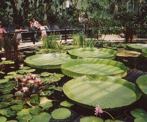 green, lotus, and nature image