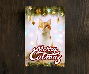 cute cat, greeting cards, and meow image