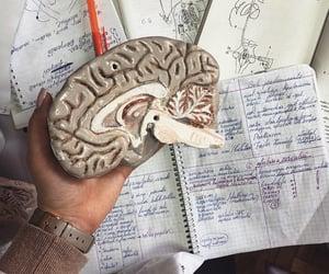anatomy, doctor, and graduation image