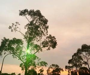 aesthetic, australia, and photography image