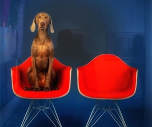 art, chairs, and Eames image