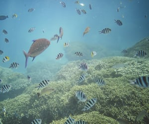 ocean, travel, and tropical fish image