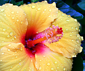 flower and water image