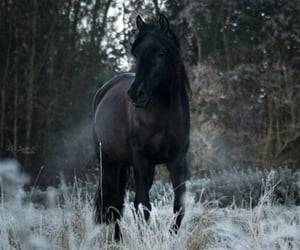 andalusian, cold, and horse image