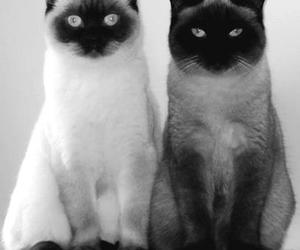 black or white, cat, and photography image