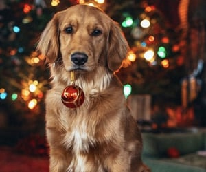 christmas, winter, and puppy image