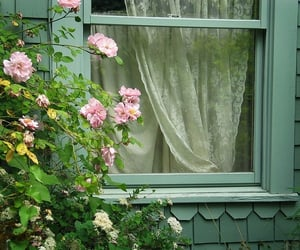 flowers, window, and garden image