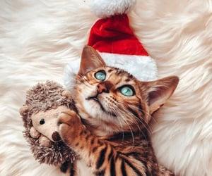 christmas and cute image