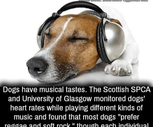 doh, dogs=gods, and play that funky music image