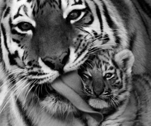 animal, awesome, and black and white image