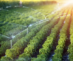 irrigation system, lawn sprinklers, and automatic sprinklers image