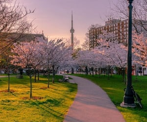 canada, cherry blossoms, and hipster image