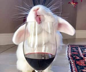 animals, wine, and bunny image
