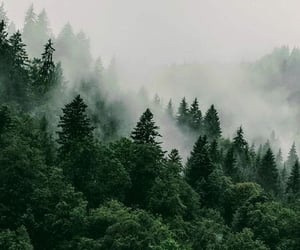forest, fog, and green image