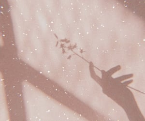 aesthetic, flowers, and shadow image