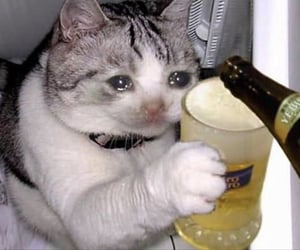 cat, beer, and funny image