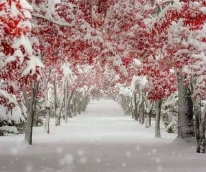 december, nature, and red image
