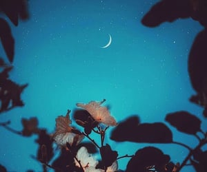 flowers, moon, and moonlight image