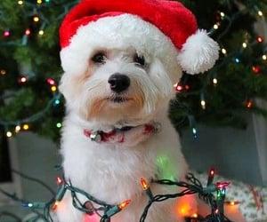 bright, christmas, and dog image