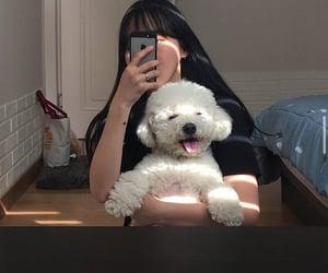 alternative, asian, and dog image