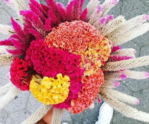 flores, blooms, and bouquet image