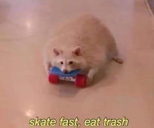 raccoon, skateboard, and racoon image