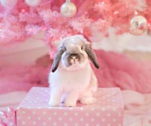 bunny, christmas, and pink image