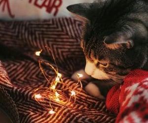 bokeh, cat, and christmas image