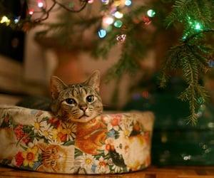 kitten, bokeh, and cat image