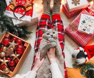 cat, christmas, and happiness image