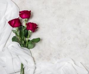 flores, rosas, and rosas rojas image