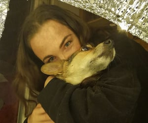 corgi, hugs, and abrazo image