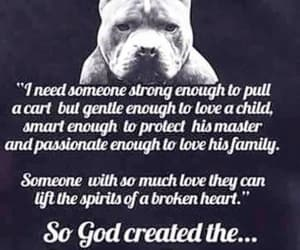 so much love, dogs are love, and pit bull image