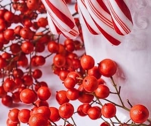 aesthetic, white, and berries image