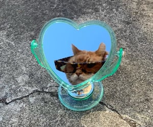 cat and sunglasses image