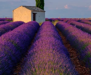 europe, france, and lavender image