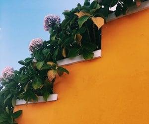 aesthetics, flowers, and yellow image
